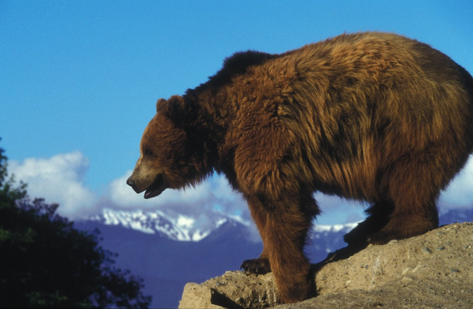 Photo of A Real Life Grizzly Adams – The Story Of Casey and Brutus