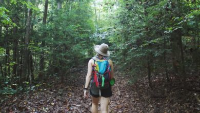 Photo of The Complete Beginner's Guide to Hiking