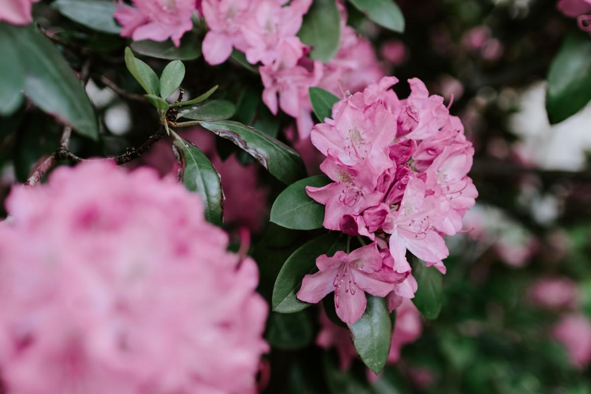 Spring Wildflower hikes in North Carolina